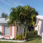 Areca Palm – Areca triandra