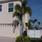 Foxtail Palm – Wodyetia bifurcata