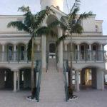 Montgomery Palm – Veitchia montgomeryana
