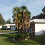 Paurotis Palm – Acoelorrhaphe wrightii