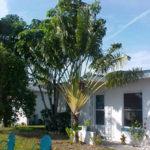 Travellers Palm – Ravenala madagascariensis