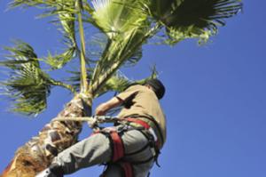 Tree Trimming - Arbor Care Services
